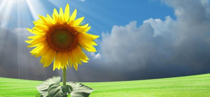Pensiero positivo – Perché è importante e come coltivarlo